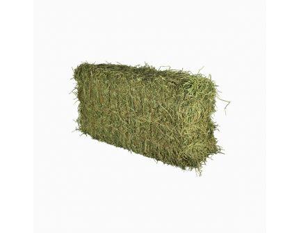 Alfalfa Hay (Premium)